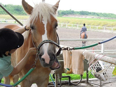 反抗する馬の対処法