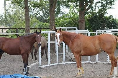 放牧で仲良しの馬