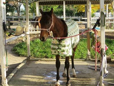 理性の馬or感情の馬
