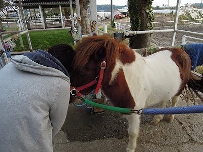 馬と仲良くなる方法