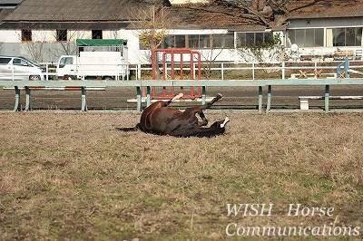 馬の幸せ風景