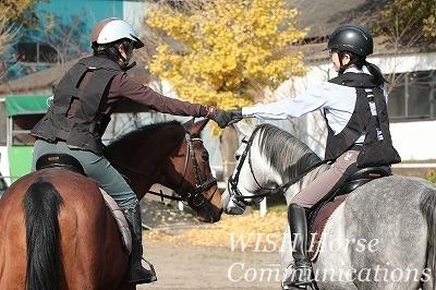 馬と楽しむ乗馬