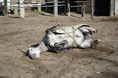 馬達の日常に癒される