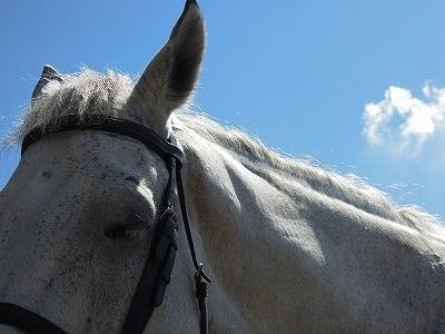 馬が可愛すぎて一日でも見てられる