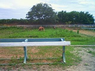 乗馬の放牧風景