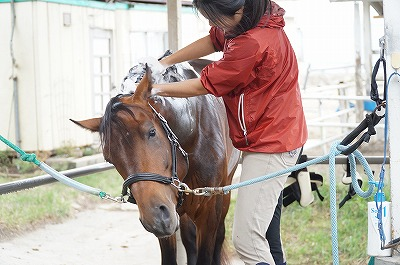 馬に優しい乗馬