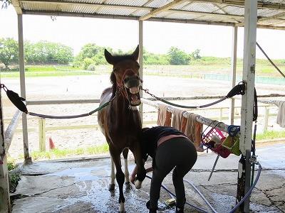 新馬調教 馬の行動心理学