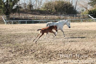 美しい子馬の走る姿