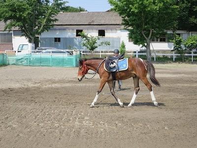 新馬調教 馬の習慣を作る