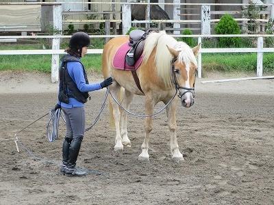 馬に納得してもらうには