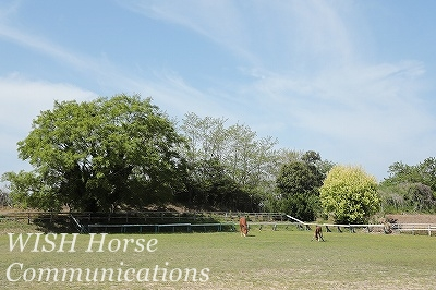 環境の良い乗馬