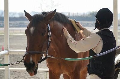 馬の気持ちいいときのボディーランゲージ