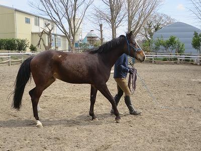 馬とバックでシンクロ
