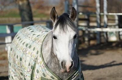 人を信頼している馬の表情