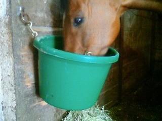 馬達の飼い桶を洗いました