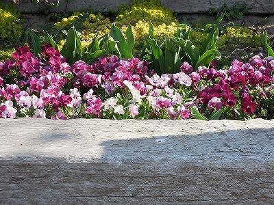 乗馬クラブの花壇に春の光