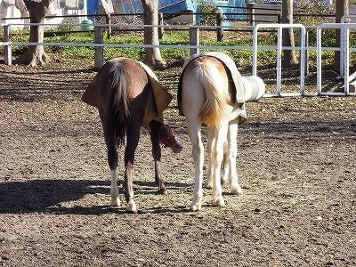 丸いお尻は馬の健康のしるし