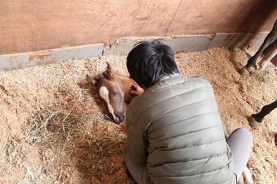 馬の刷り込み