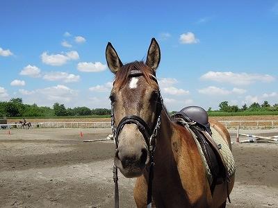 いきいきとした馬の顔
