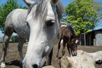 優しい最高の馬