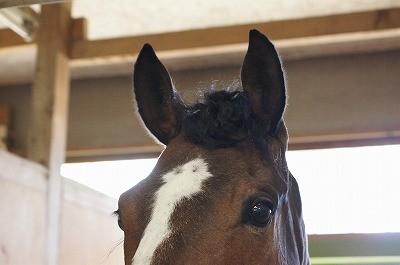 馬術競技会おつかれさま!