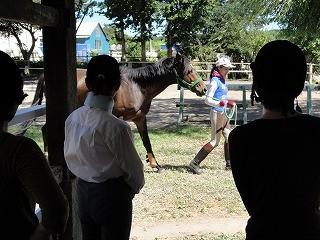 乗馬クラブウィッシュではフレンドリーのレッスンをしています