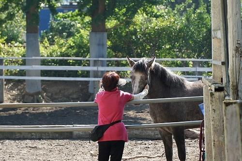 馬とコミュニケーションしたい