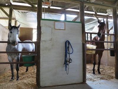 馬とサンシェード