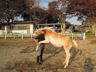 馬と踊ろう!