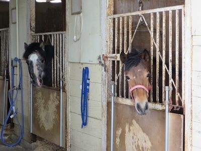 新馬調教 馬をよく観察