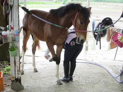 新馬調教 肢を上げる