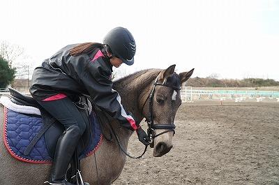馬におやつを与えるのにもルールがあります