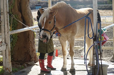 馬のQOL