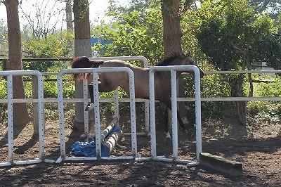 馬のフリージャンプ