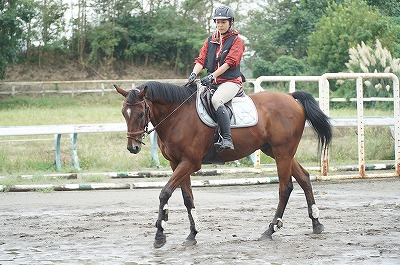 馬を大切にする乗り方