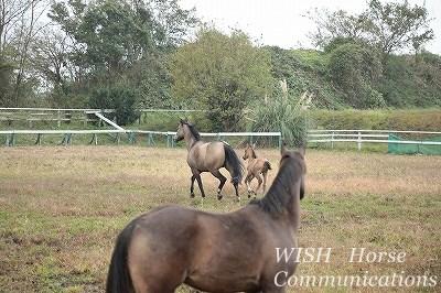 馬にも豊かな感情がある
