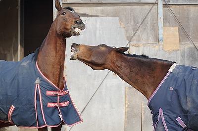 楽しそうな馬は何をしてても可愛いね!