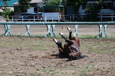 馬の幸せの表情