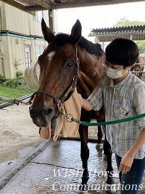 馬の幸せそうな顔
