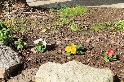 乗馬クラブのお花植え