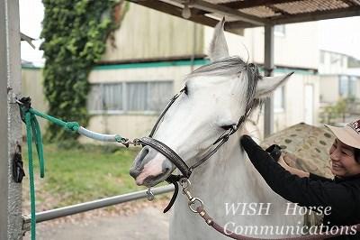 馬にとって人間が快適な存在でありますように