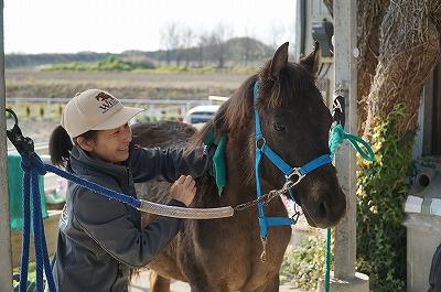 馬はすべてを反映している