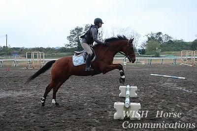 馬に優しい乗り方