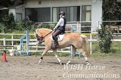 乗馬と安全