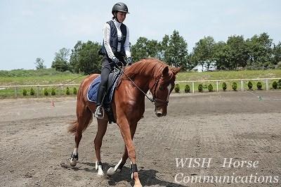 馬と向き合う乗馬