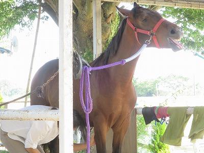 馬の喜びが私の喜び