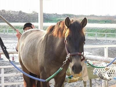 馬との信頼関係を作る