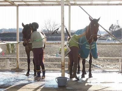 安心で楽しい乗馬