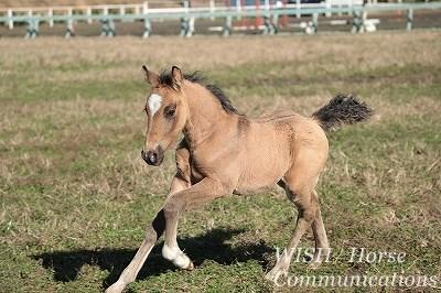 馬生産には高度な知識と経験が必要