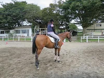 乗馬の研究